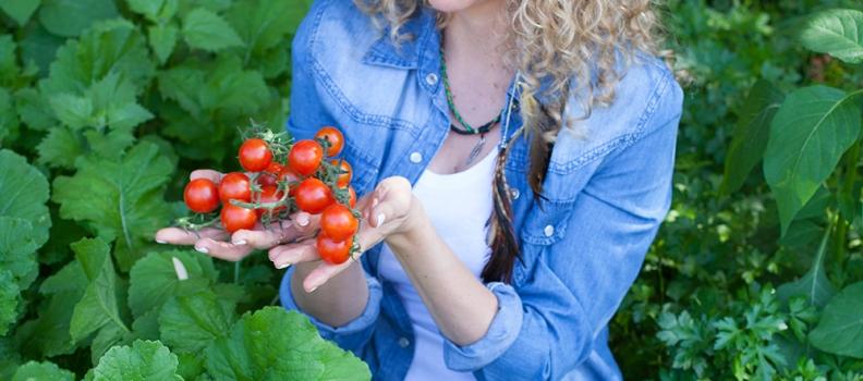 עגבניות אדומות מאודות